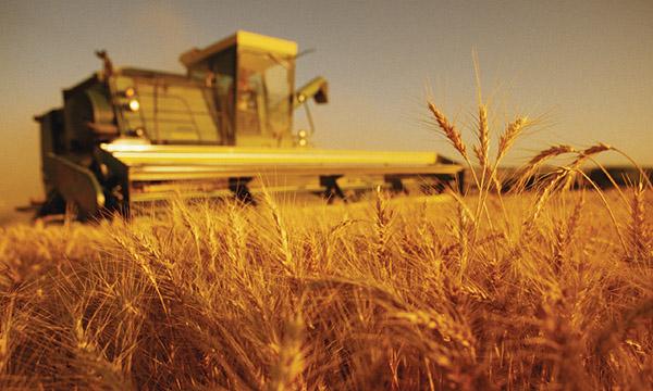 В Украине к 7 ноября валовой сбор зерна составил почти 59 млн. тонн
