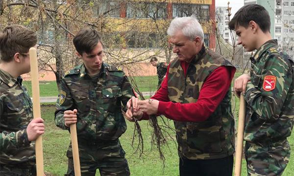 Плотников: Продолжаем традицию по озеленению пришкольных территорий